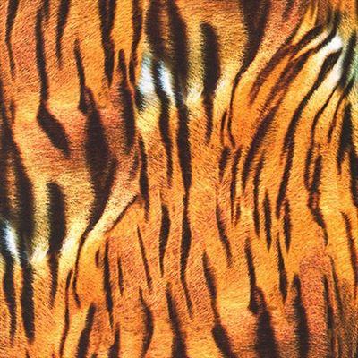 "108"" Backing- Animal Kingdom- Tiger- SATEEN"